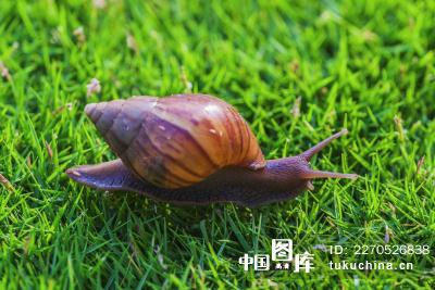 海南岛的蜗牛