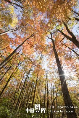 微信封面秋天风景图片