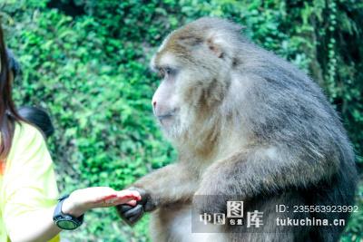 风景类:峨眉山的猴子