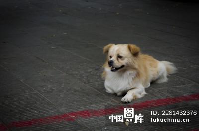 伤心的狗-忧郁的小狗