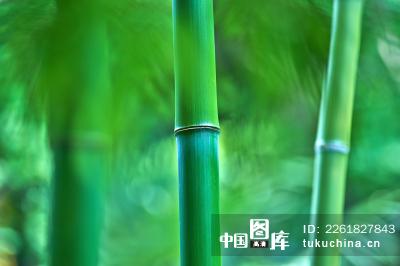 微信风景竹子山水
