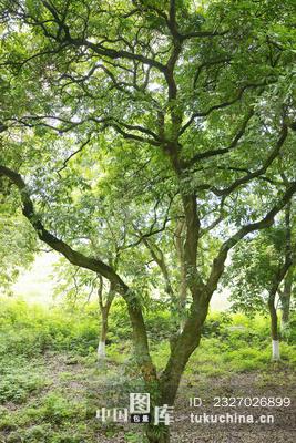微信头像风景树路