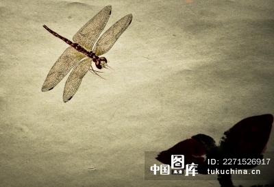 中国风 工笔画 蜻蜓