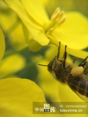 异新 勤劳的小蜜蜂采蜂蜜图片