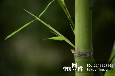 竹子高清微信头像