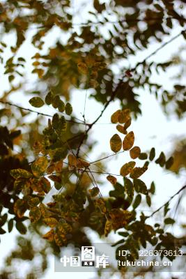 冬天的树叶
